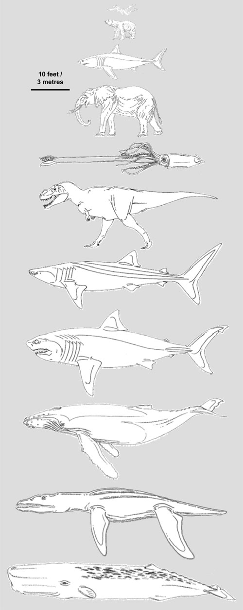 Megalodon Compared with Other Giants